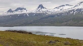 Islande à vélo 2014, fjord Berufjordur en Islande