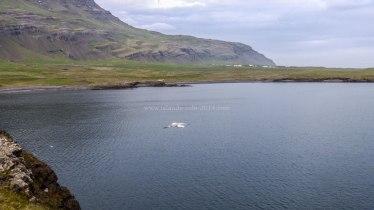 Islande à vélo 2014, bivouac au pied d'un fjord d'Islande