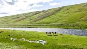 Islande à vélo 2014 en direction de la F35