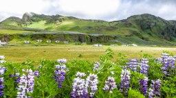 Islande à vélo 2014 dans le Sud