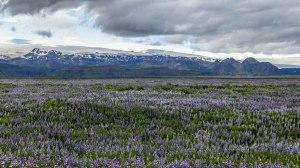 Islande à vélo 2014, vue sur ke Myrdalsjokull