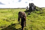 islande à vélo, chevaux autour de grindavik