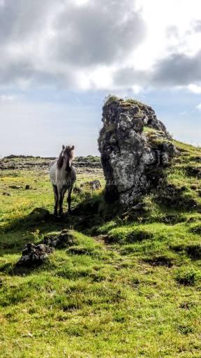 Islande à vélo 2014, promenade à grindavik