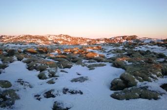 Mousse volcanique sur un champ de lave enneigé, en Islande à vélo en hiver
